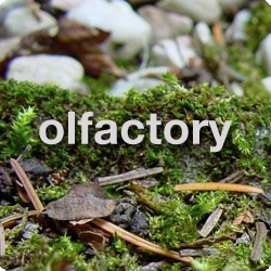tamar-olfactory